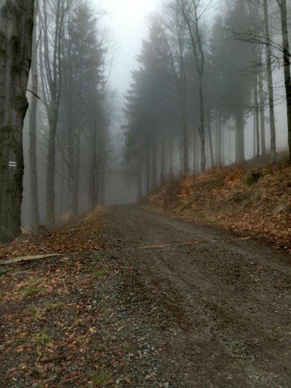 szlak górski Dolny Śląsk Góry Sowie