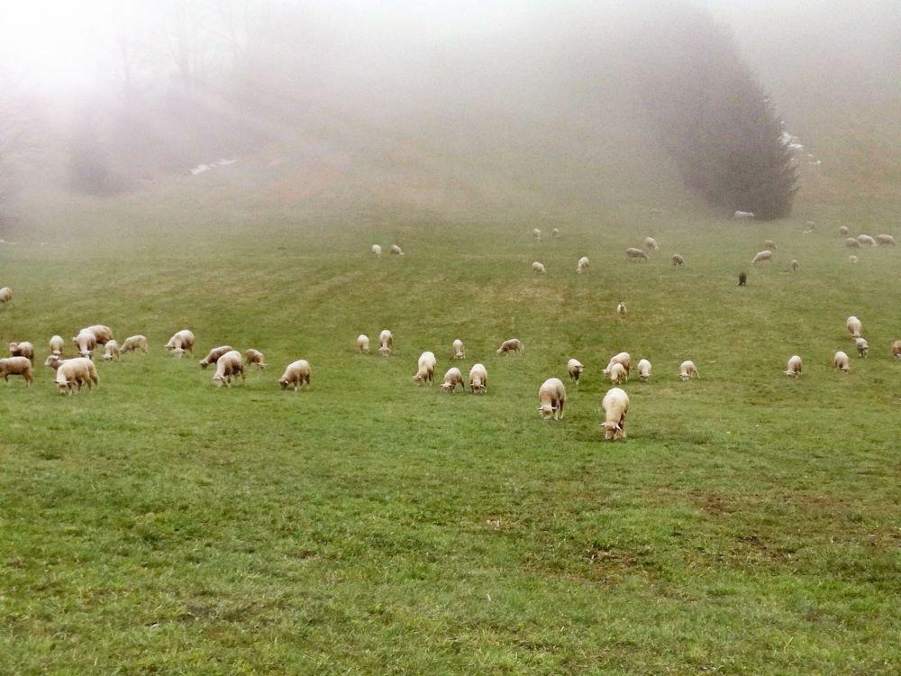 gory sowie owce dolny slask