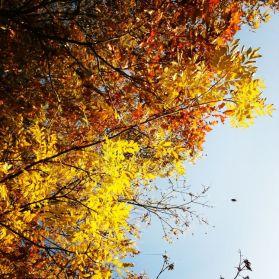 Drzewa Park Cieszków