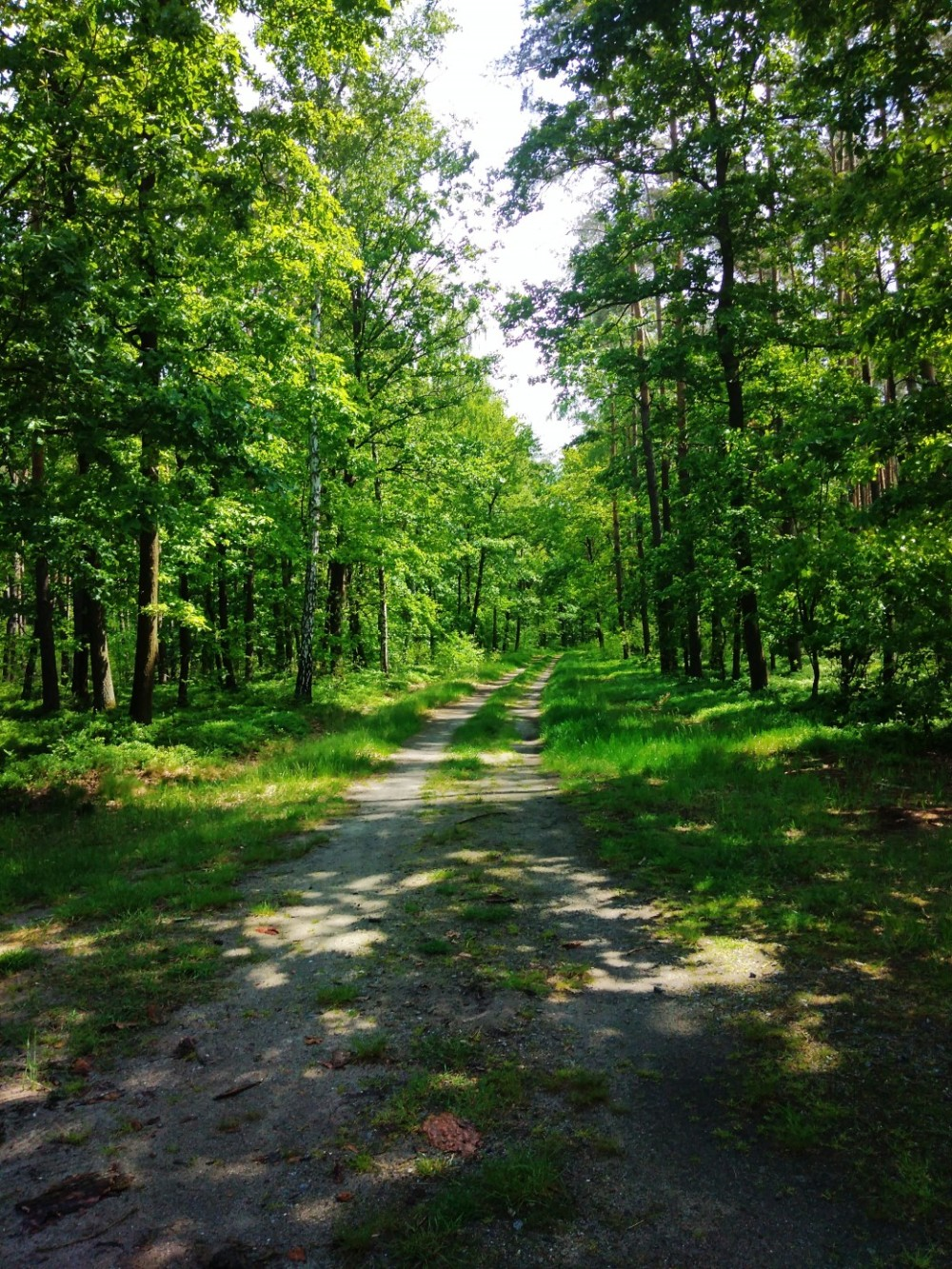 zielony las wiosna dolny slask