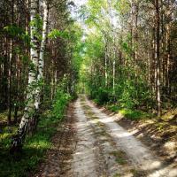 Dlaczego przebywanie w lesie wzmacnia odporność? Lecznicze właściwości lasu
