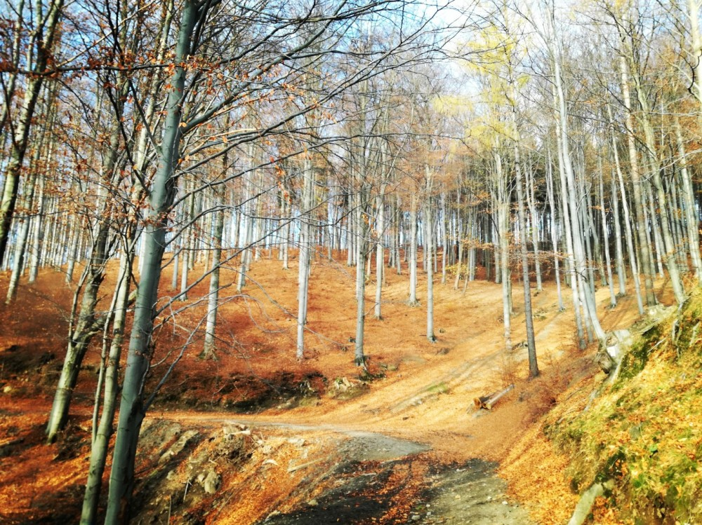 bukowy las gory sowie jesien