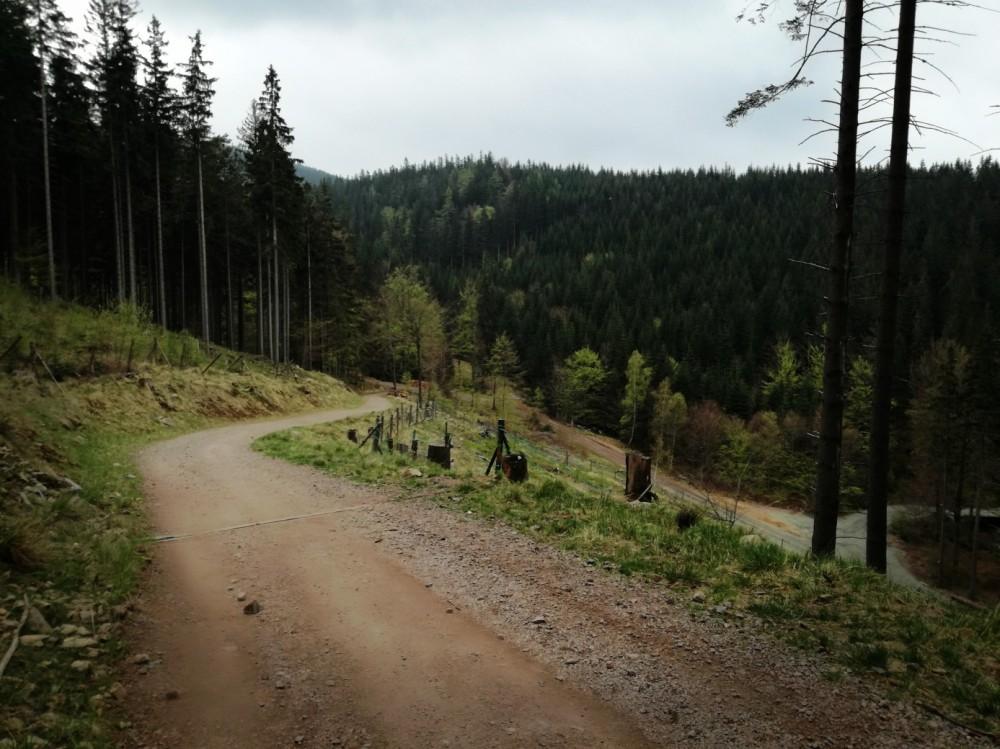 droga sosnowy las w masywie snieznika